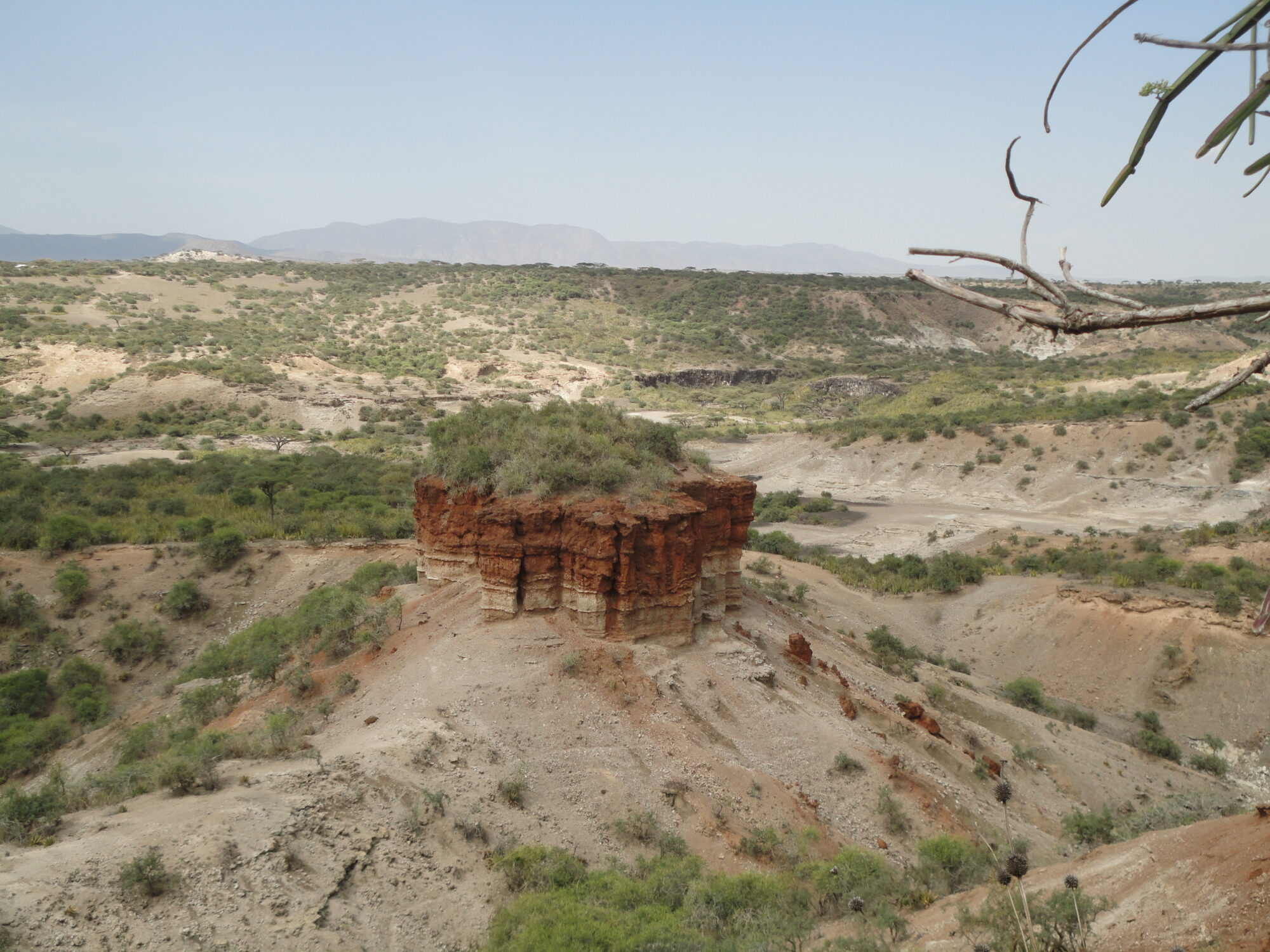 Travel Medicine - The Olduvai Gorge